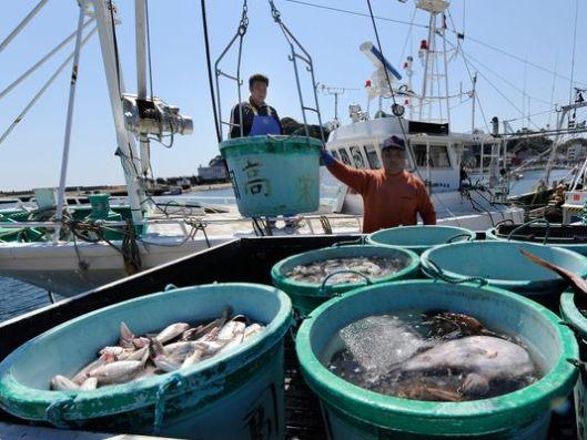 Fukushima seafood